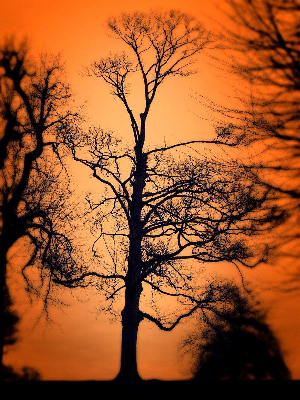 Orange Sky Tree Silhouette