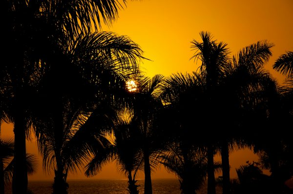 Golden Palm Trees