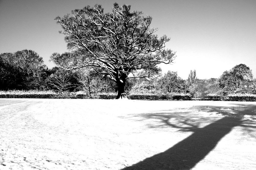 Snowy Tree Shadow