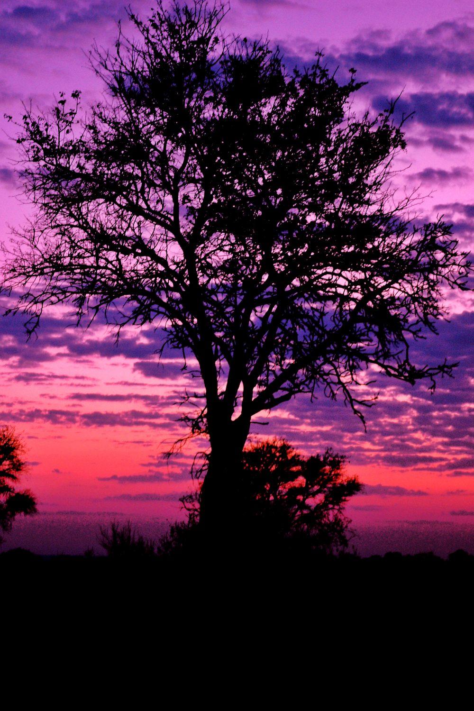 Pink Sky Tree Silhouette